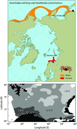 The current distribution of the crab (top) and the area it will likely spread to in the Barents Sea over the coming years