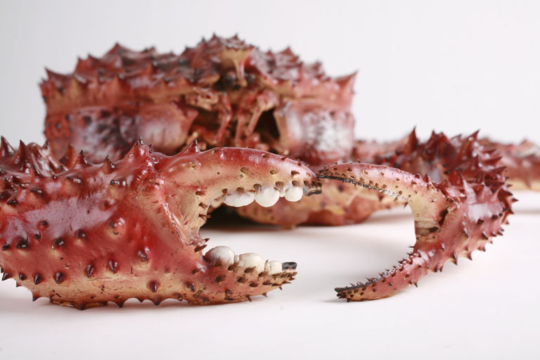 The Red King Crab has been invading Norwegian waters over the last 50 years