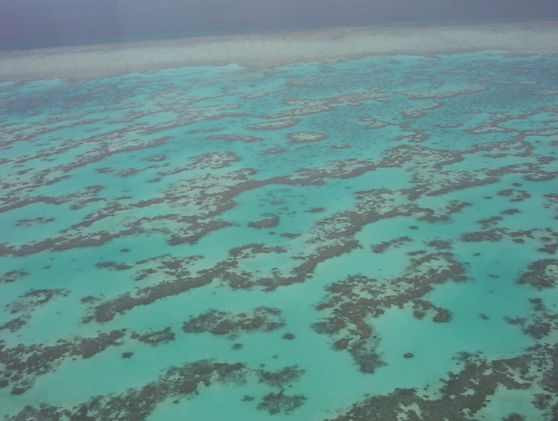 Eutrophication affects marine environments too, with large swathes of reefs worldwide having transitioned from coral reefs to algal reefs