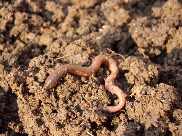 Earthworm biomass is a key indicator of ecosystem functioning