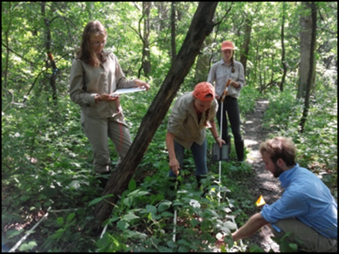 Mark's research group has recently been looking at the effects of garlic mustard, a non-native species in Minnesota. Despite the fact that it is thought to have very harmful effects on native species, Mark's group has found no evidence of effects on native herbs, shrubs or tree seedlings