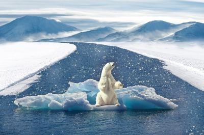 The image of the lone polar bear has become almost ubiquitous in step with growing awareness of climate change. So why hasn't the scientific community been able to convince the world to act accordingly?