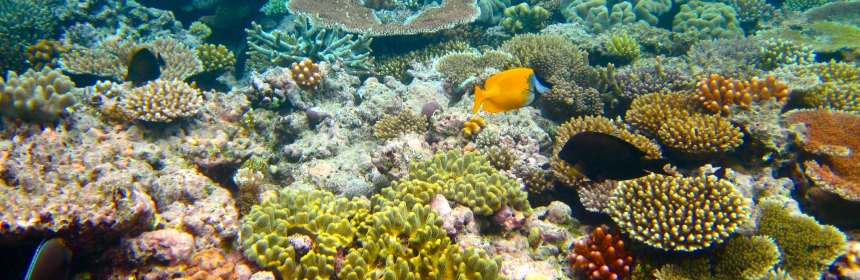 The Great Barrier Reef has experienced mass mortality in recent years. But can we save it, and how do we impose the severity of its condition on the public? (Image Credit: Kyle Taylor, CC BY 2.0)