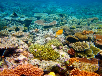 The Great Barrier Reef has experienced mass mortality in recent years. But can we save it, and how do we impose the severity of its condition on the public?