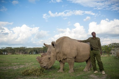 Sudan, the last male northern white rhino, 3 years before he passed away, rendering the species functionally extinct. But should species like this be the focus of our conservation efforts?