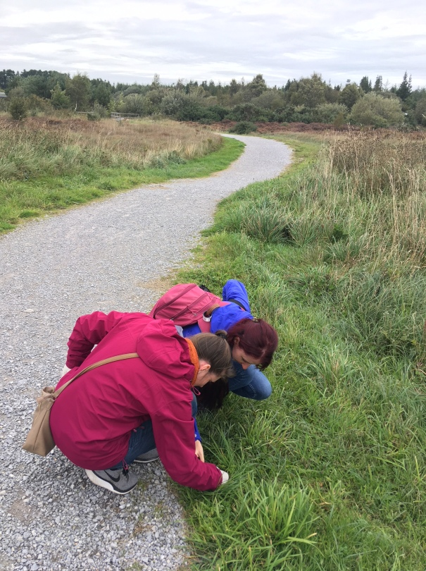 Malene Nygard and Lene Meleshko observing Irish Plant Life at the Lough Boora Discovery Park