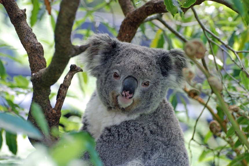 Species like koalas are cute and fluffy, and thus easy to provide funding for. But how do we save species that are more threatened and less charismatic?