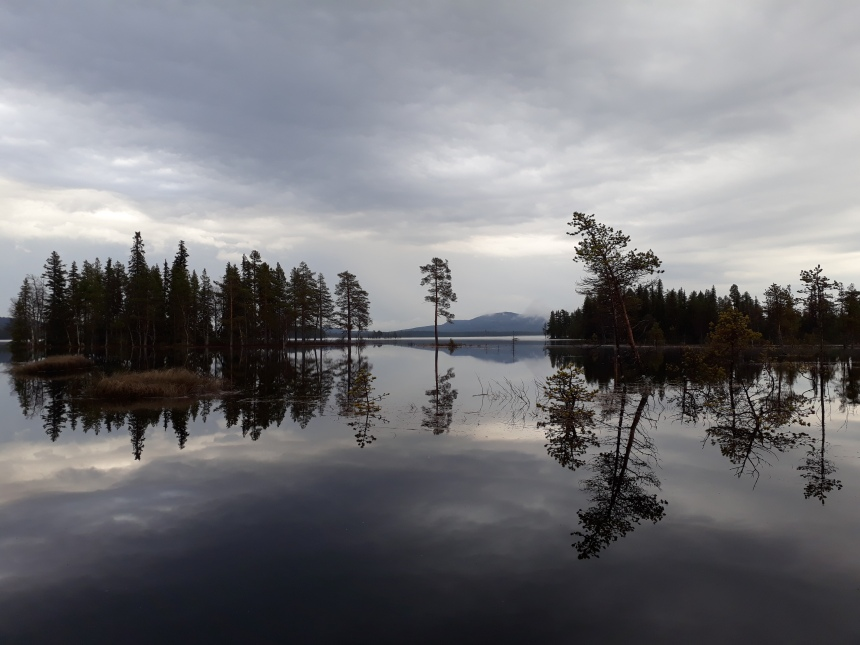 Lakes like this one in Sweden's northernmost region may one day be home to the blue-tailed damselfly