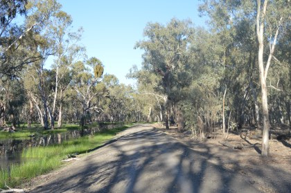 On the left, a thriving wetland. The right, an arid forest.