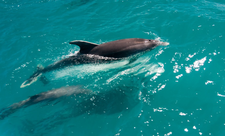 Charismatic species like the bottlenose dolphin are generally easier to find funding for. So what's it like to work with them as a scientist. I spoke to evolutionary biologist Celine Frere to find out