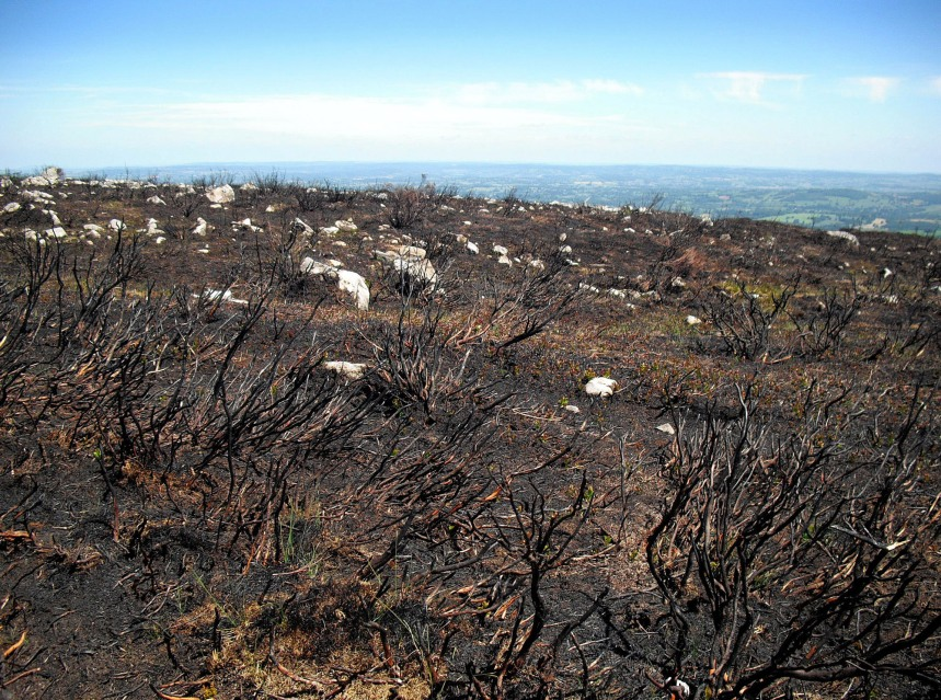 Bushfires like the ones that have ravaged Australia and California this year could become the new norm for the generation that has been born in the last decade, an example of how our perception of ecological change is defined by what has happened in our lifetime