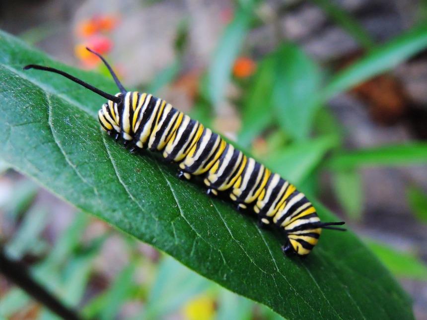 caterpillar-1544640_1920