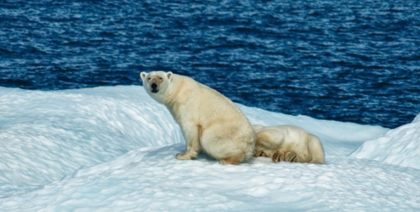 Whilst the RSFs created by Durner et al., may have worked well initially, worsening conditions for polar bears have forced them to use sub-optimal habitat, weakening the validity of their models