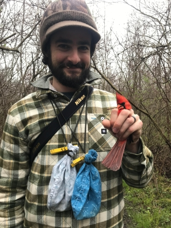 Dan with a Northern Cardinal, a species which may seem commonplace to many North Americans, but on which there was relatively little research (Image Credit: Dan Baldassarre, CC BY 2.0)