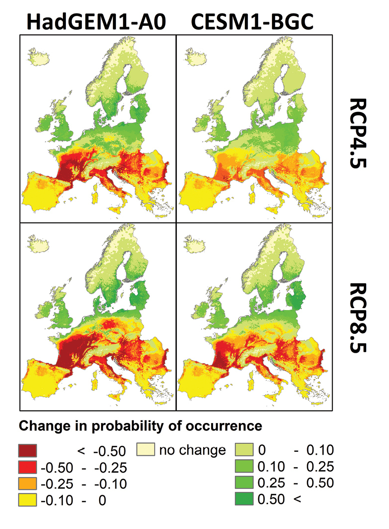 Here you can see areas where coypus will be more likely to occur as the temperature increases. The two upper graphs represent a 'medium' climate warming scenario, whereas the lower figures represent a more severe scenario (Image Credit: Schetler et al., 2020)